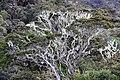 Mount Kemiri (8237086939).jpg