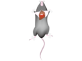 Mouse-during-dissection.png