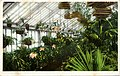 Mrs Roosevelt's Famous Orchard Collection, white house Conservatories (NBY 9640).jpg