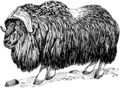 Musk Ox (PSF).png