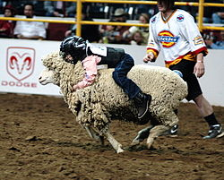 Mutton busting at a rodeo in Denver, Colorado