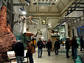 NMNH Hall of Mammals.jpg