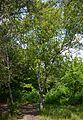 Naddniprianske Arboretum of Agriculture Institute of Southern Region 22 (YDS 2301).jpg