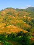 Nagarkot crops and houses.jpg
