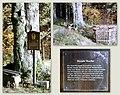 Naturdenkmal Runde Buche Rammenau.jpg