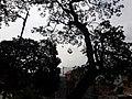 Nature 144637(0).jpg