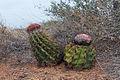 Nature in Margarita Island, Nueva Esparta, Venezuela 09.jpg