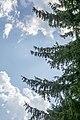 Nebo iznad nas Stara planina.jpg