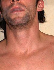 A human neck.