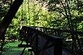 Newhalem, WA - Trail of the Cedars 25.jpg