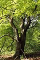 Niedersachsen, Brambostel, Naturdenkmal ND UE 00099 02.jpg