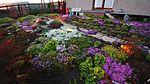 Night Garden IMG 1091 (14614965813).jpg