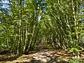 Nine Acre Wood, Welwyn Hatfield 2 2020-09-01.jpg