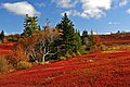 Nova Scotia DSC 9818 - Trees on Red (3057921685).jpg
