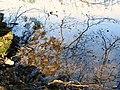 Nuuksio. Kattilajärvi. Foto by Victor Belousov. - panoramio (2).jpg