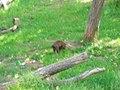 OKC Zoo May 2007 - 63 (497243481).jpg