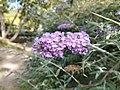 Ogród Szeląg (4).jpg