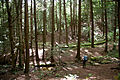Oil Creek State Park On the Trail in a hollow.jpg