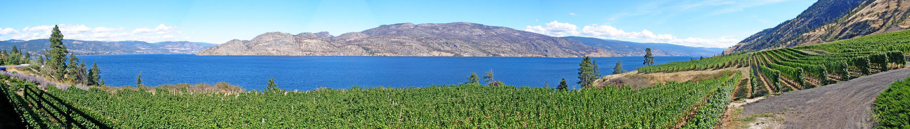 Okanagan banner Greata Vineyard view.jpg