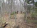 Old gateway in woods, Georgetown, PEI (26521082002).jpg