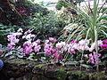 Orchideen 1 - dab.jpg