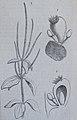 Ottův slovník naučný - obrázek č. 3080.JPG