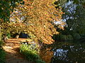 Oxford - Worcester College - lake shore sun.jpg