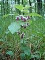 Přírodní park Baba753.jpg