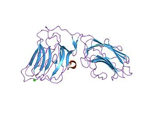 Laminin - laminin alpha 2 chain lg4-5 domain pair, ca1 site mutant