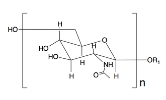 Dispersin B - Structure of Poly-N-acetyl-D-glucosamine