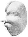 PSM V72 D309 Whale ear bone.png