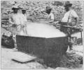 PSM V82 D543 Dipping abalones from the boiling tank.png