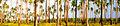 Palawan - Palm Forest banner.jpg