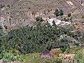 Palmeral de Santa Lucía de Tirajana - panoramio.jpg