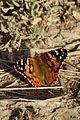 Papillon - Marais du Vigueirat.jpg
