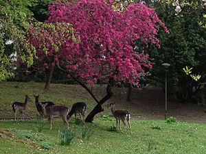 Villa Haas - Flora and fauna