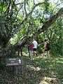 Parque Estadual da Campina do Encantado 05.jpeg