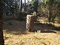 Parque nacional de Peneda-Gerês (36968480543).jpg