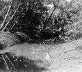 Parti av floden som ställvis skar genom och blottade arkeologi. Darién. Panama - SMVK - 004328.tif