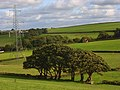 Pastures, Newton Tracey - geograph.org.uk - 964777.jpg