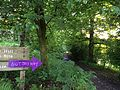 Path at Mugdock Park, Glasgow.jpg