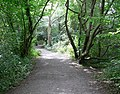 Path through Ambion Wood - geograph.org.uk - 918544.jpg