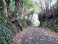 Pedestrianised lane behind Goswela Gardens - geograph.org.uk - 1556411.jpg