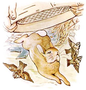 The Tale of Peter Rabbit - Mr. McGregor tries to trap Peter under a garden sieve