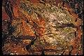 Petrified Wood at Petrified Forest National Park, Arizona (93bee90c-eeb9-4ad1-b715-2138f77240db).jpg