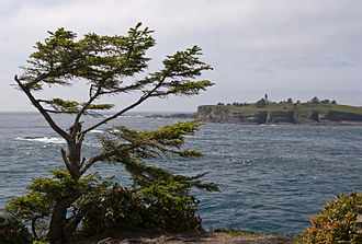 Cape Flattery - Tatoosh Island and Cape Flattery Light from Cape Flattery, with Sitka Spruce in foreground.