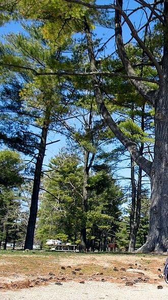 Harrison Lake State Park - Image: Picnic site at Harrison Lake State Park, Ohio