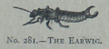 Picture Natural History - No 281 - The Earwig.png