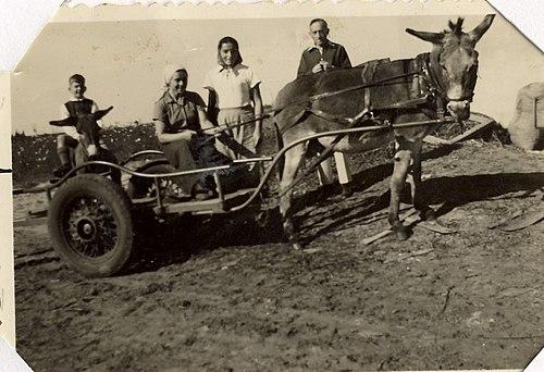 PikiWiki Israel 13003 Ramat Hakovesh.jpg