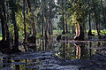 PikiWiki Israel 29553 Hedera forest.jpg